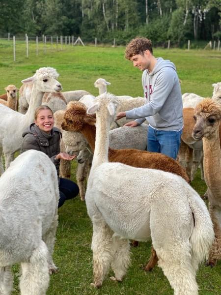 Alpaka-Momente exklusiv, Gutschein für bis zu 10 Personen